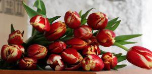 bukiet z tulipanow